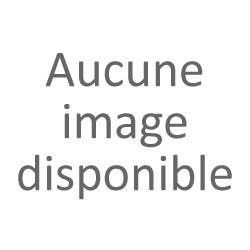 Thujopsis dolobrata 'Aurea'